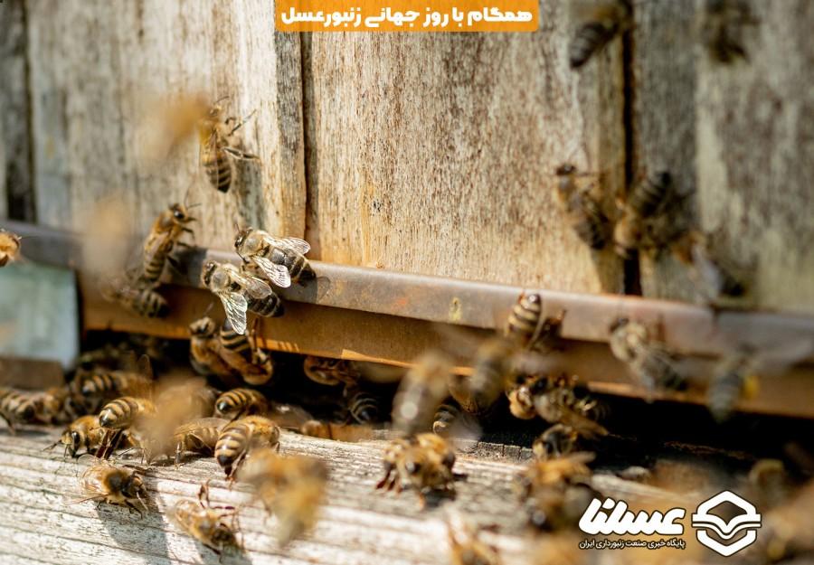 همگام با روز جهانی زنبور عسل