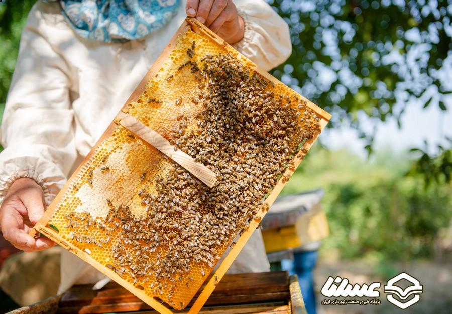 توسط صندوق حمایت از توسعه صنعت زنبورداری کشور اجرایی شد