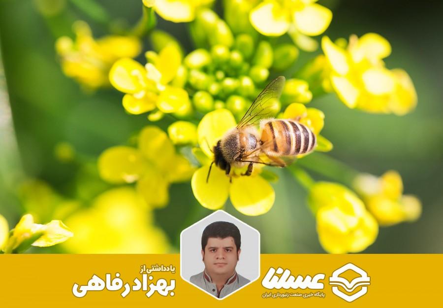 اطلاعاتی در مورد گرده گل