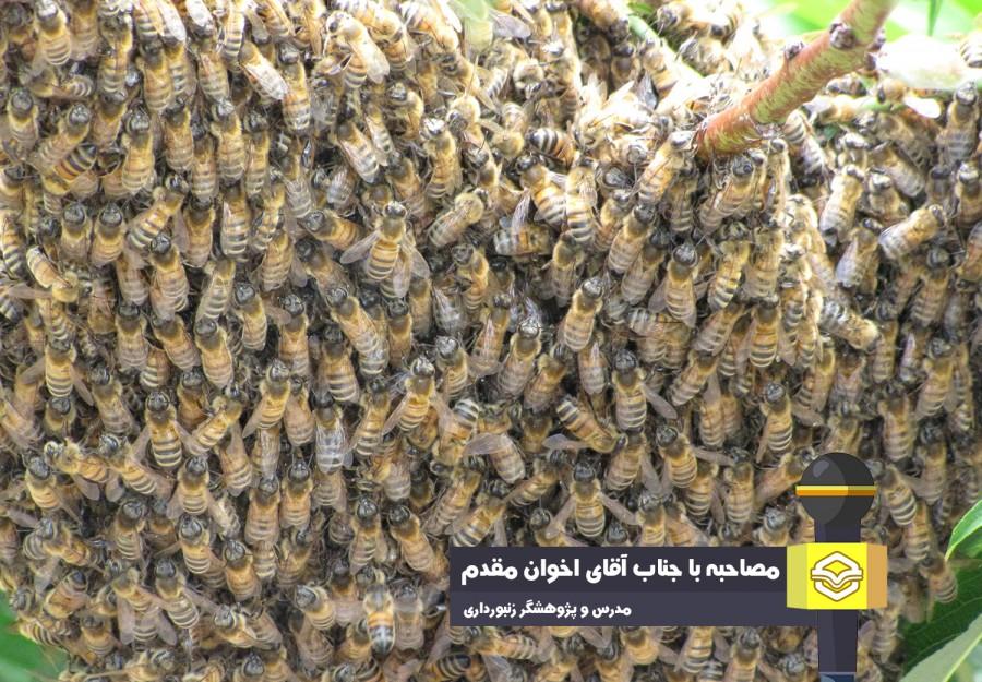 تأکید اخوان مقدم بر استفاده از نژاد بومی زنبورعسل ایرانی