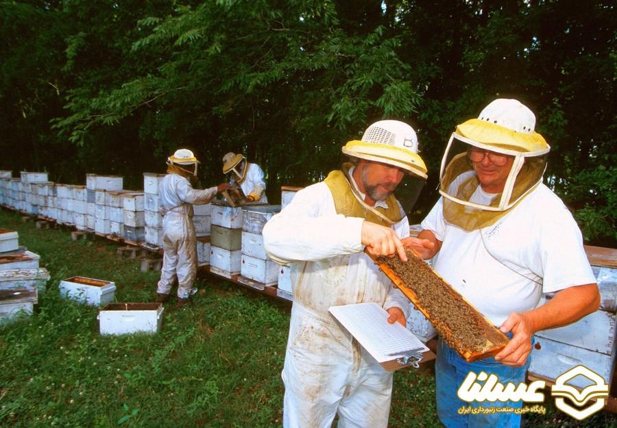 روش های ساده اما کاربردی آموزش زنبورداری