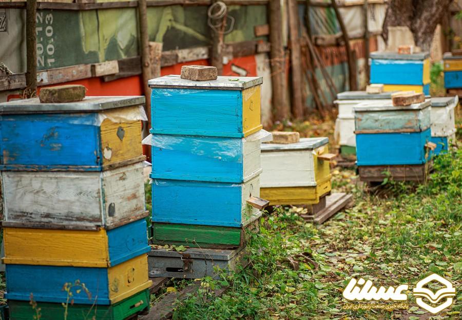 گرده افشانی درآمد اصلی زنبورداران امریکایی است