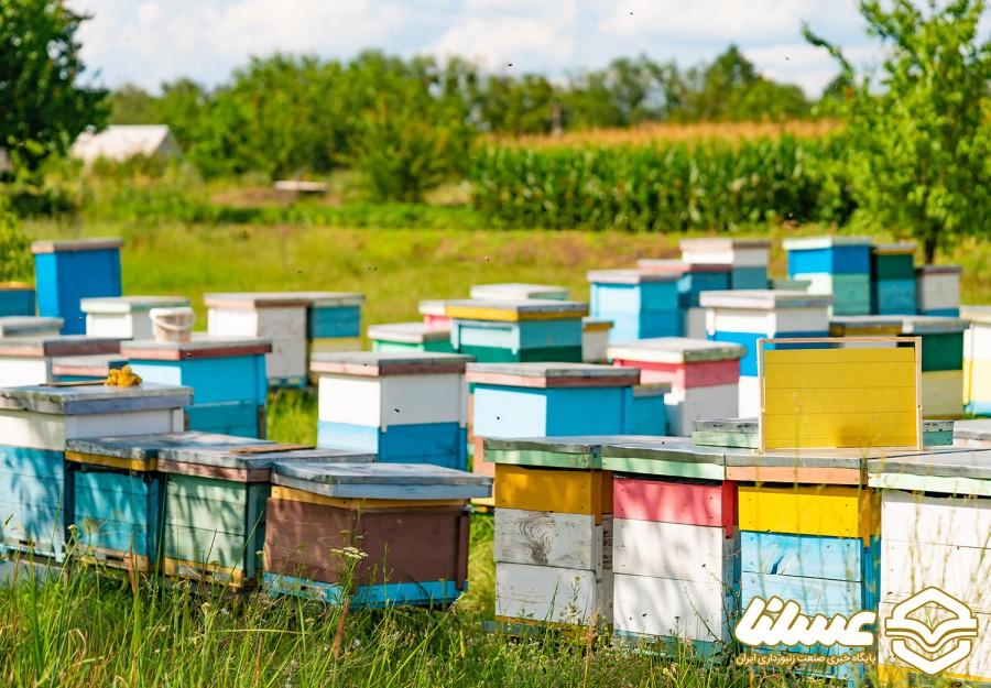 استقرار ۴۵ هزار کندوی عسل در مناطق ییلاقی شاهیندژ
