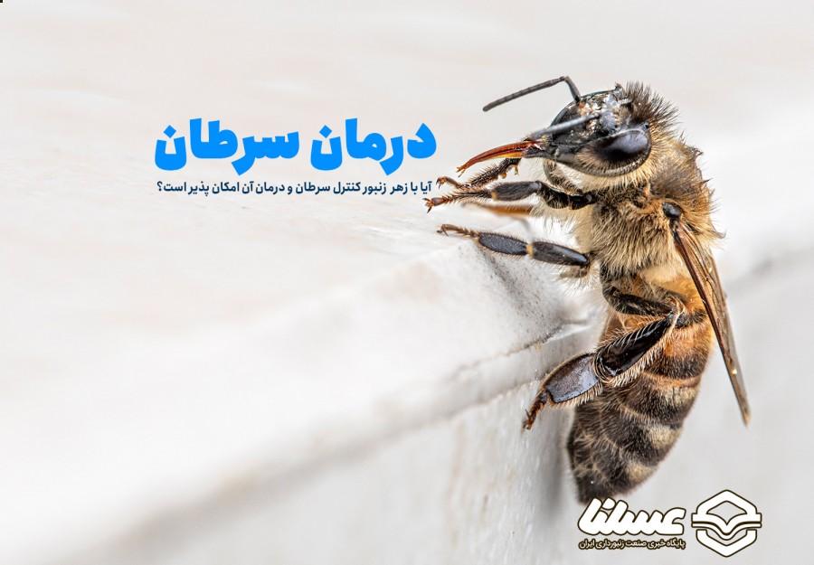 زهر زنبور عسل چطور به درمان سرطان کمک می کند؟