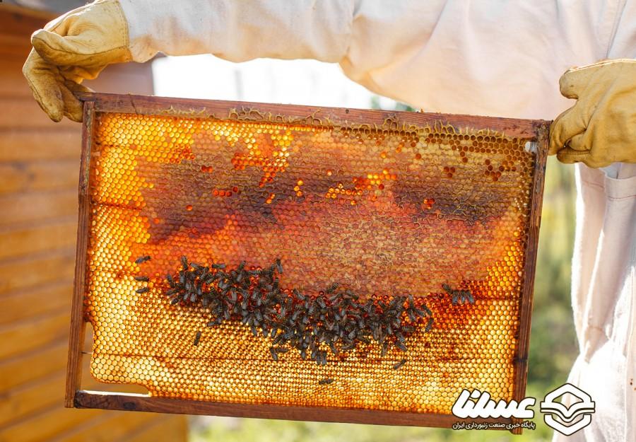 تولید 1100 تن عسل در تبریز