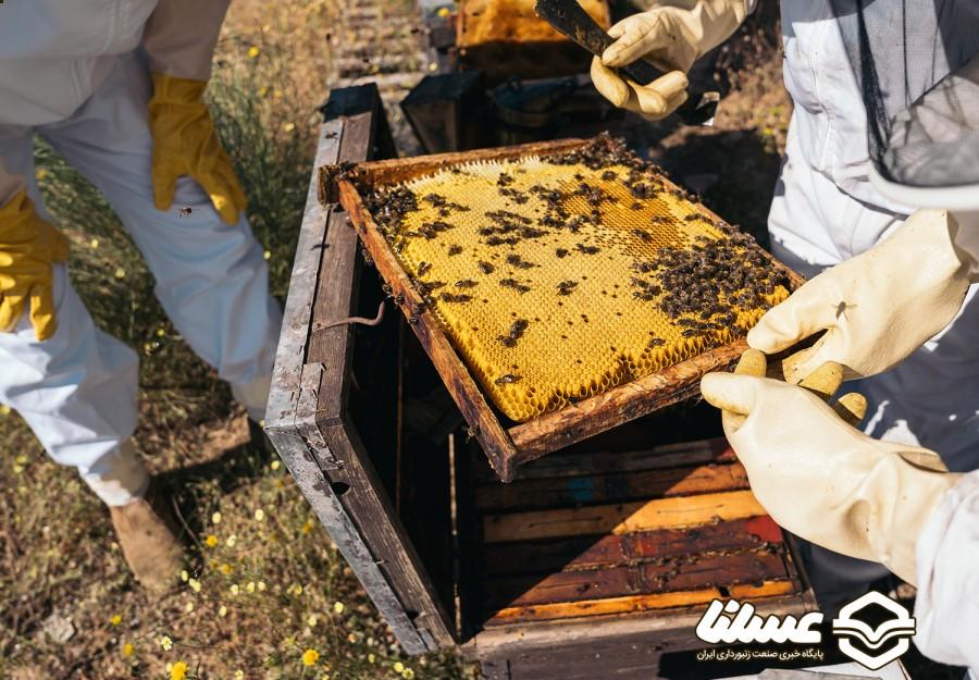 آذربایجان غربی رکوردار تولید عسل در کشور