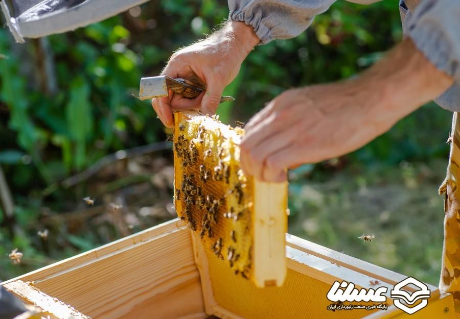 439 تن عسل طبیعی، حاصل تلاش زنبورداران شاهین دژ