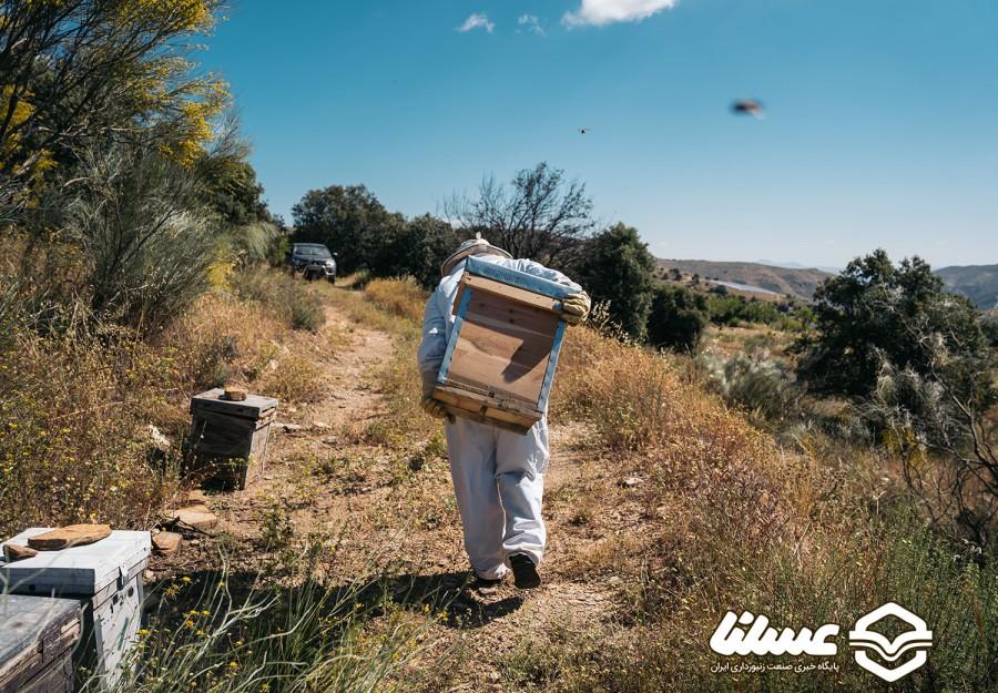 جهش تولید با کار آفرینی عشایر و پرورش ۵ هزار کلنی زنبور عسل در کهگیلویه