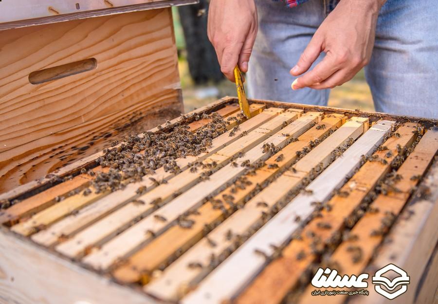 شورای کانادا در پی بهبود شرایط زنبورداری در شهر