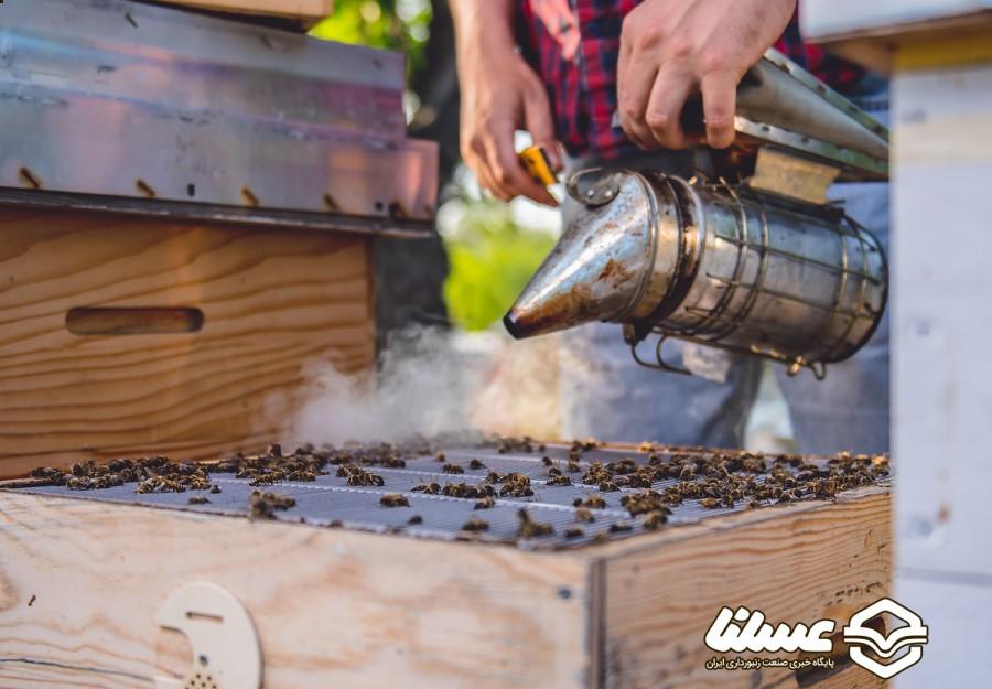 زنبورهای عسل جورجیا مقام اول مسابقات ملی عسل شیشه سیاه را کسب کردند