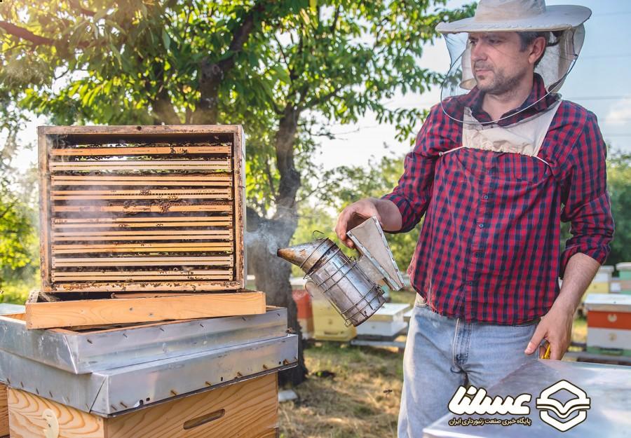 زنبورداری با هدف عشق به طبیعت در کپنهاگ دانمارک