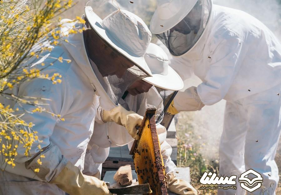 روش جدیدی برای محافظت از زنبورهای عسل در برابر آفتکشها