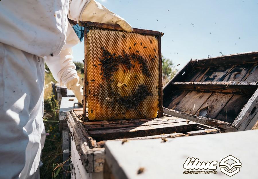 مدیرعامل شرکت تعاونی زنبورداران اشن بیان کرد