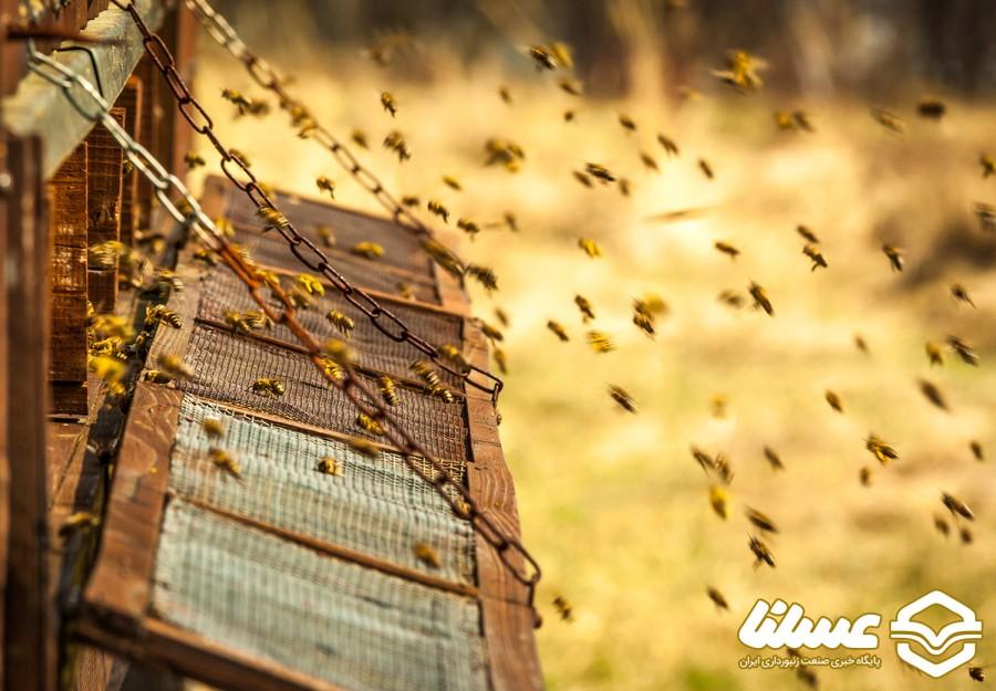 رئیس هیئتمدیره اتحادیه زنبورداران نجفآباد مطرح کرد