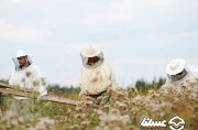 هشدار قرمز برای صنعت زنبورداری کشور / تلفات بالای زنبورهای عسل و ضرورت تشکیل شورای مدیریت بحران