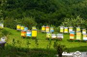 بالغبر 4 میلیارد ریال تسهیلات ارزانقیمت به تعاونیهای زنبورداری پرداخت شد