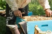 بیمه، حسرت بزرگ زنبورداران شاهرود و میامی