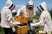 مجوز استقرار ۲۷ هزار کندوی زنبور عسل در چالدران صادر شد