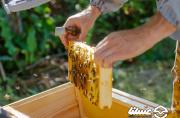 پیش بینی برداشت ۱۲۵ تن عسل در شهرستان بهار