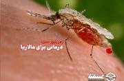 درمان مالاریا با زهر زنبور عسل؛ زهردرمانی راه حلی قدیمی برای مالاریا