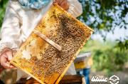 کندوهای کف باز در همدان به زنبورستان ها رسیدند