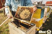 تولید 7 درصد از عسل ایران در اردبیل