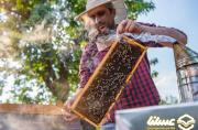 تولید عسل کرمانشاه به 7000 تن می رسد