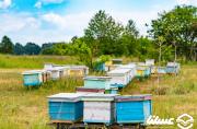 تولید 24 درصد عسل کشور در خوشه صنعتی عسل ارومیه