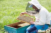 تولید 1250 تن عسل به صورت سالانه در تهران