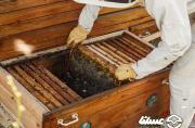 تولید ۳۱هزار تُن عسل در صومعه سرا