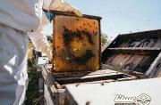 تولید عسل در لرستان به 2700 تن می رسد