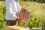 خوی رتبه اول در تولید عسل کشور