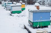 تلفات زمستانی زنبورستانها بالاست؛ تعداد قاب کلنیها نصف شده است