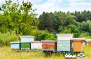 برای رونق صادرات عسل به تربیت کارشناسان نخبه بازاریابی نیازمندیم
