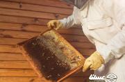 استانداردهای اجباری بخش عمده بازار عسل را نادیده گرفته است