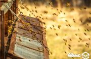 خروج کارخانه شهدآوران از تملک بانک | شهدآوران به اعضای تعاونی زنبورداران تعلق دارد