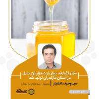 افزایش 5 درصدی محصولات زنبورعسل/ بیش از 5 هزار تن عسل در استان مازندران تولید شد