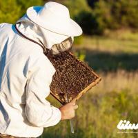 قیمت عسل با هزینههای موجود مطابقت ندارد
