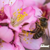 انتشار جدیدترین اخبار و مصاحبههای ویژه با نخبگان صنعت زنبورداری
