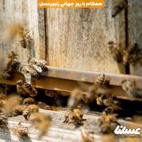 بازارهای کشاورزی استرالیا به احترام زنبورها زرد پوش شد