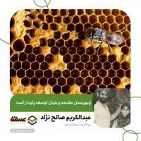 زنبورعسل مقدمه و بنیان توسعه پایدار است