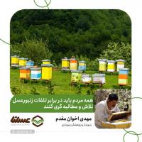 همه مردم باید در برابر تلفات زنبورعسل تلاش و مطالبه گری کنند