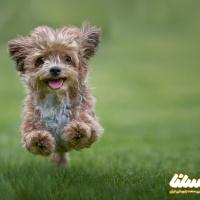گرده گل و خاصیت آن برای سگ ها؛ بیشتر به حیوانات خانگی خود رسیدگی کنید