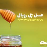 عسل ژل رویال؛ ژل رویال را باکیفیت مصرف کنیم