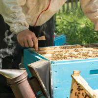 آیا شغل زنبورداری شغل راحتی به حساب می آید؟