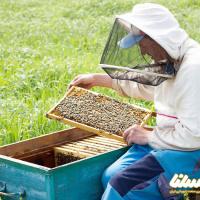 ظرفیتهای بالای پرورش زنبور عسل در سمنان