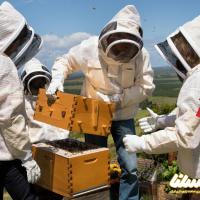 قرنطینه کرونایی موجب افزایش بیسابقه تولید عسل در آلبانی شد