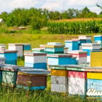 تولید یک هزار و ۲۴۷ تُنی عسل در استان تهران طی سال گذشته