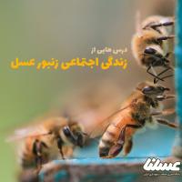 درس هایی از زندگی اجتماعی زنبور عسل
