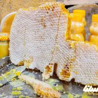 پیش بینی تولید ۴۴۰ تن عسل در چالدران